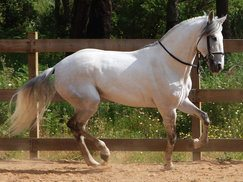ATTENTION LUSITANO OWNERS