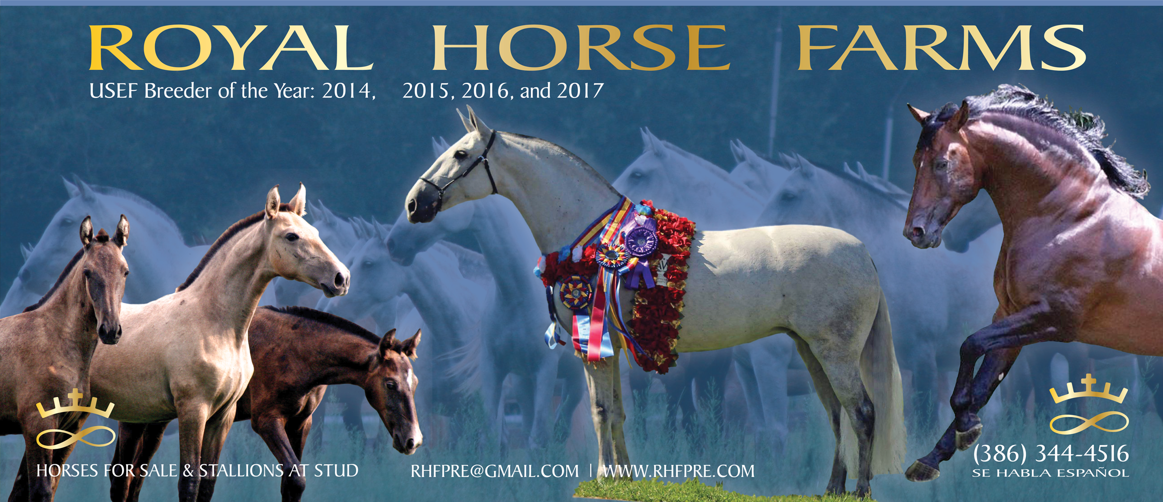 RoyalHorseFarmsAd_Issue2_web
