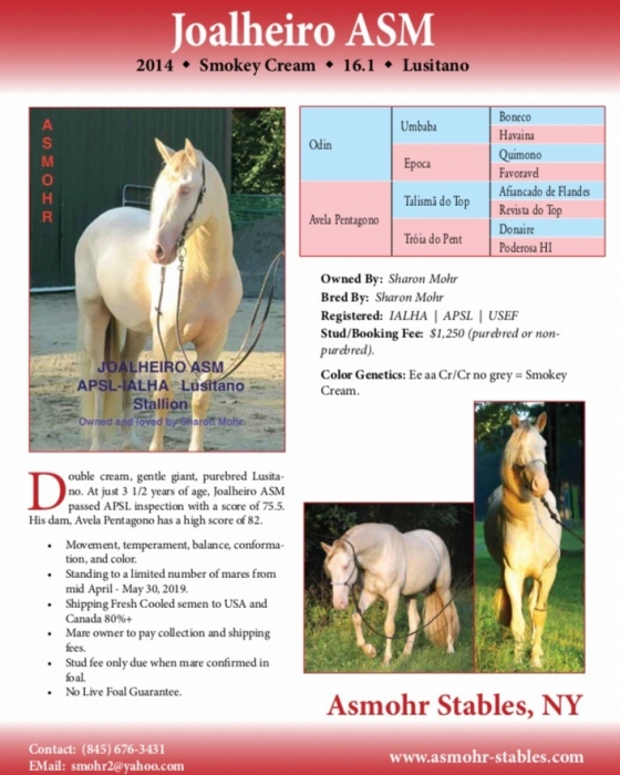 Lusitano Stallion at Stud