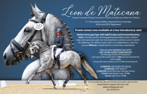 Leon de Matecana, Lusitano Stallion