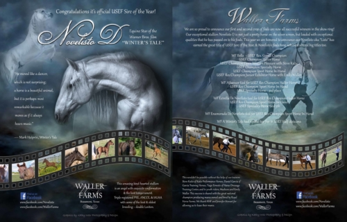 Waller Farms Andalusian Breeding and Sales