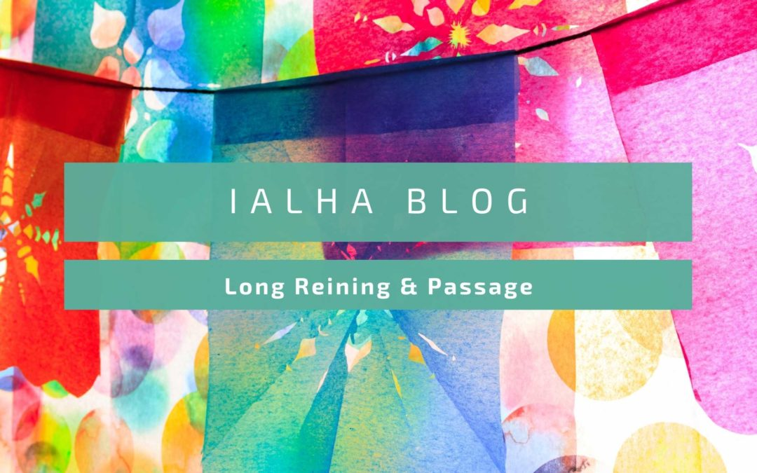 Long reining and Passage